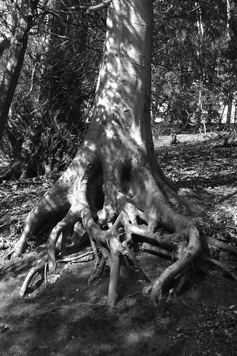 Gnarly Tree - Black and White