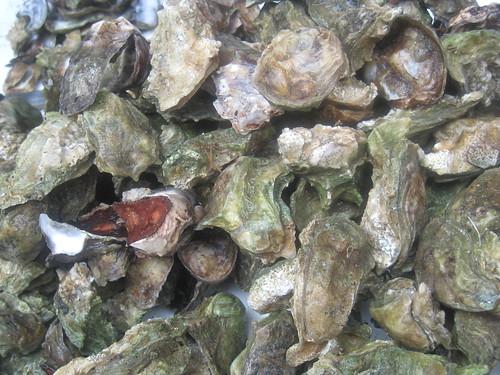 Las ostras de Edgar  son naturales y  bien grandes