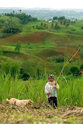 boy, farm, Philippines, rural goat kambing Negros Oriental