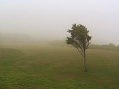 Fog, 1 of 5