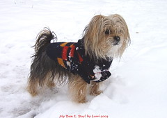 My Dan E. Boy in the Snow!!!