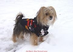 My Dan E. Boy in the Snow!!!