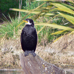 little shag on a perch