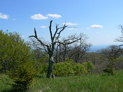 Tree and View