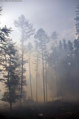 Waldbrand Platte 23.05.07