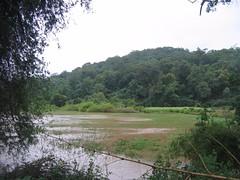 Kollibacchalu Dam -Malenadu Heavy Rain Effects Photography By Chinmaya M.Rao   (101)