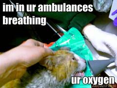 im in ur ambulances breathing ur oxygen