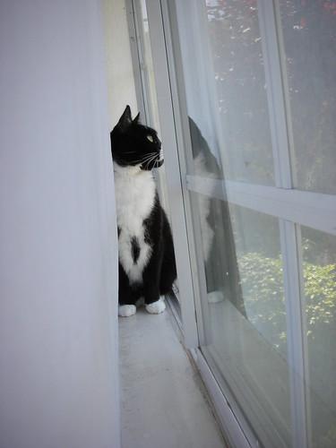 Watching the birds
