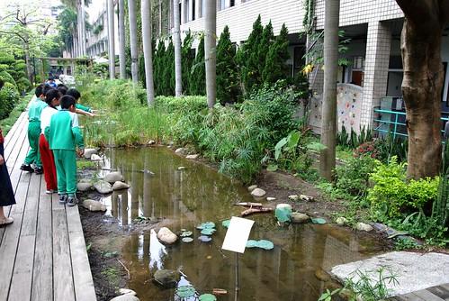 雙蓮國小-生態池