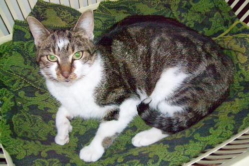 Velcro the cat