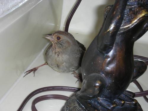 Bird in the Bathroom