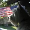 Flag Dog