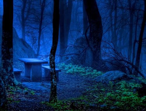 Misty Evening Mountain Café