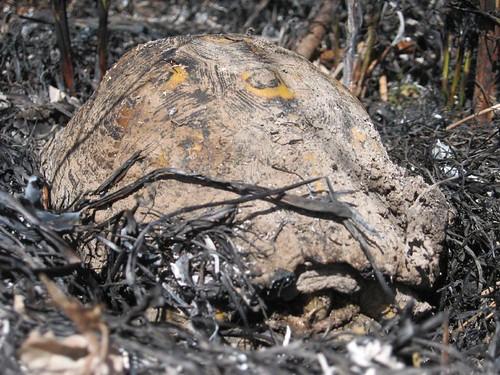 Wetland_Burn_April_20_2007 030