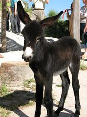 Seven day old Donkey_0715
