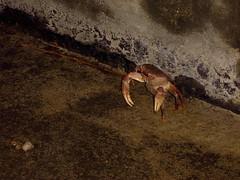 安平路上的螃蟹!!