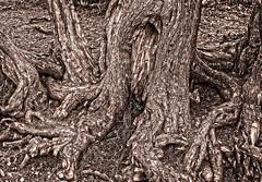 Gnarly trees...