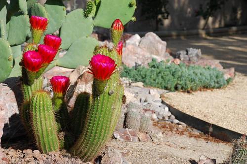Cactus Garden 3