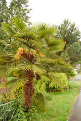 There is a PALM TREE in my neighborhood!!!