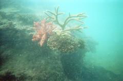 Scuba Dive Pulau Tinggi