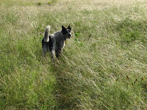 gromgrass