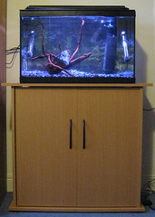 Aquarium set up