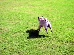 Run Freddie Run