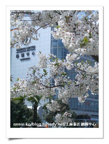 透過櫻花看德國中心