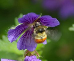A flower and a bee
