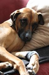 Injured Doggo