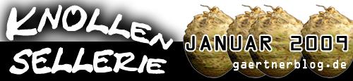Garten-Koch-Event: Knollensellerie