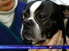 Oreo on WNBC for Nutro Pet Food Recall