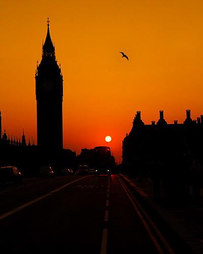 Big Ben and Bird