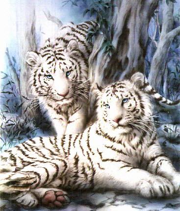 white tigers by blondie997.