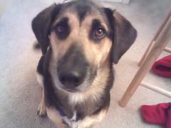puppy dog eyes 2