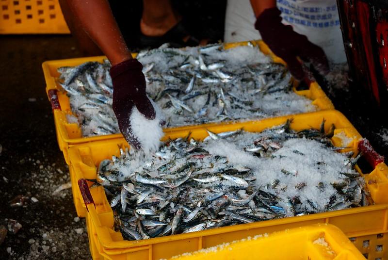 [澎湖] 琳瑯滿目漁獲-初夏第三漁港魚市場 @ 尋著貓腳印覓食... :: 痞客邦