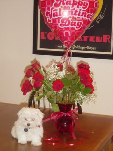 Rigby Valentine