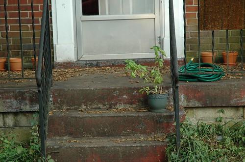 Leafy Entrance