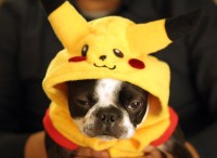 Everything Pokemon: Reluctant Pikachu - Pokemon Dog ...