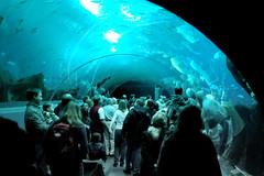 Georgia Aquarium Glass Tunnel