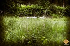 PetraSagnak_classiccar-photo.de-6163