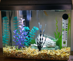 Aquarium by barron, on Flickr