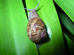 Happy Snail by davey-boy on Flickr