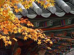 Naejangsa (Temple)
