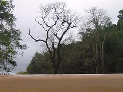 Kollibacchalu Dam -Malenadu Heavy Rain Effects Photography By Chinmaya M.Rao   (82)