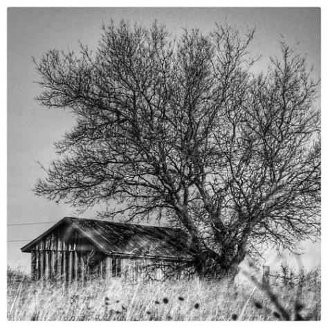 """Red Dirt Shed • <a style=""""font-size:0.8em;"""" href=""""http://www.flickr.com/photos/150185675@N05/31664267345/"""" target=""""_blank"""">View on Flickr</a>"""