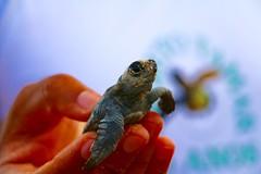 Protect, respect marine life - A. MIRANDA