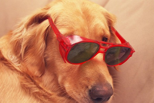 Dog Shades by skycaptaintwo, on Flickr