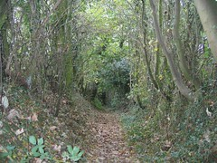 Haighton Path