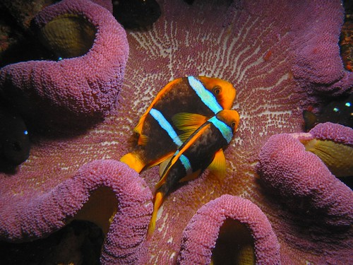 Best Scuba Diving Destinations In The World